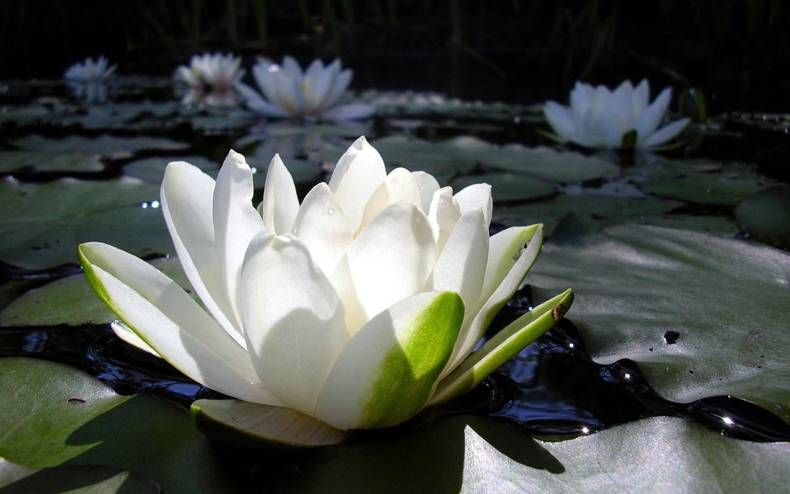 Soorten yogalessen | YogabyCarola